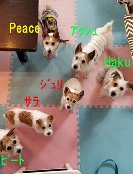 2019年海合宿&ash12才お祝い_190718_0002.jpg